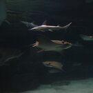 Sharkpile by Asoka