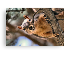 You do realize I can easily ping you with an acorn...right? Canvas Print