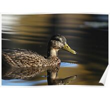 Duck on a mirror lake Poster