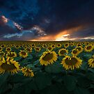 Sunflower Dusk by Ryan Wright