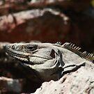 Mayan iguana  by zumi