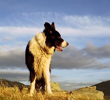 Border Collie Heaven: The Chronicles of Indy by Michael Haslam