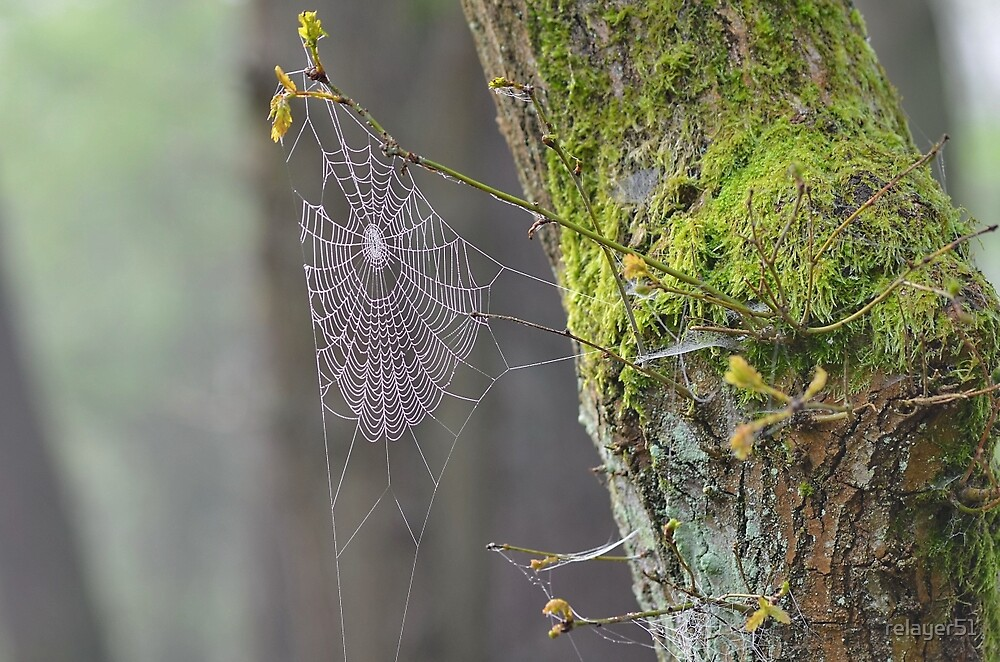 'A' Web by relayer51