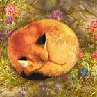 The Cozy Fox by Aimee Stewart