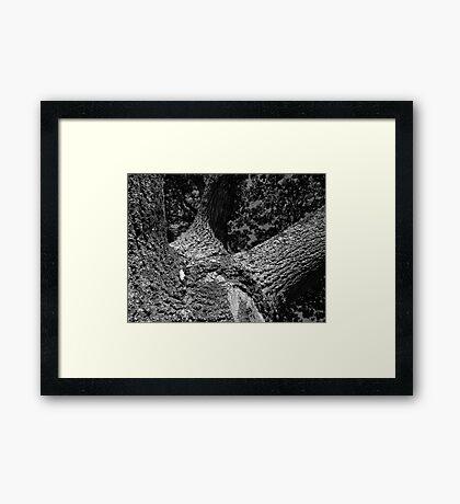 Oak Tree Monochrome Framed Print