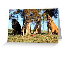2015 Four varieties of Belgian Shepherd Greeting Card