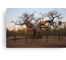 Prison Boab Tree on Sunset Canvas Print