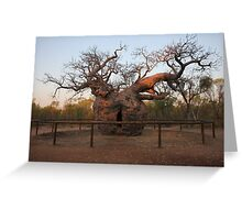 Prison Boab Tree on Sunset Greeting Card