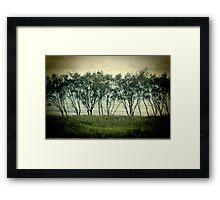 trees near the surf break lennox head Framed Print