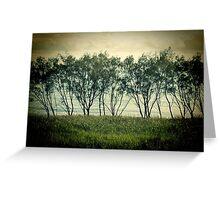 trees near the surf break lennox head Greeting Card