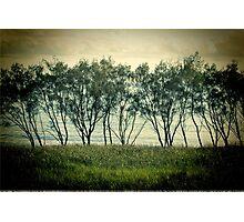 trees near the surf break lennox head Photographic Print