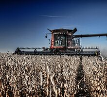 Soybean Harvest by Studio601