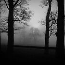 Stanley in the Mist (5) by Alan E Taylor