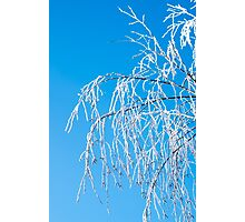 Winter tree branches covered with frost snow Photographic Print