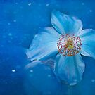 Flower of the Night by Marilyn Cornwell