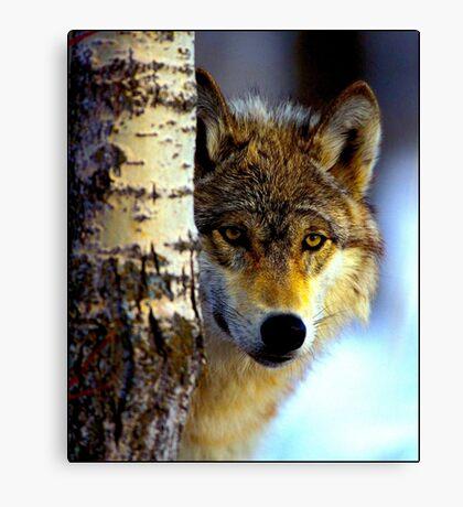TIMBER WOLF; Vintage Wilderness Print Canvas Print