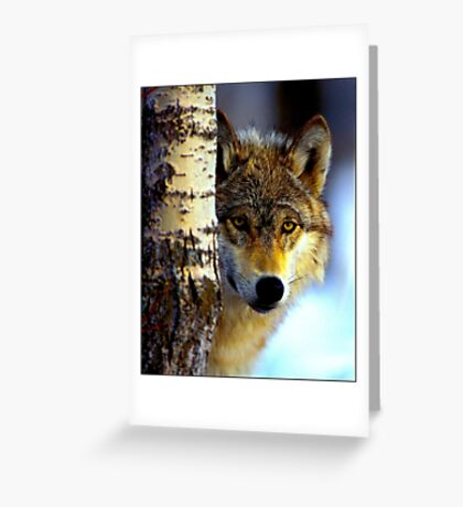 TIMBER WOLF; Vintage Wilderness Print Greeting Card