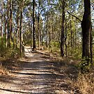 The meandering forest trail by Philip Alexander