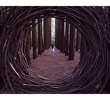 Forest Portal Photographic Print