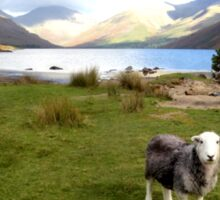 Wast Water with a Herdwick Sheep Sticker