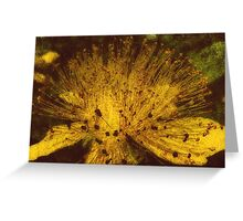 A Flower Light In The Dark Greeting Card