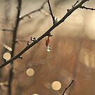 """"""" Raindrop Ablaze With Gold """" by Richard Couchman"""