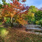 Autumn Bench by Darren Wilkes
