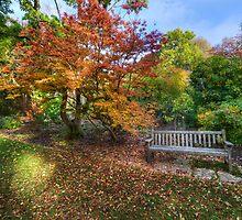 Autumn Bench by Darren Wilkes