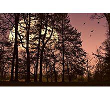 Moon Lit Silhouette Photographic Print