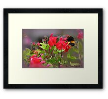 Bumble Bee Bum ~ Framed Print