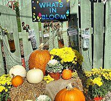 Autumn on Display by Monnie Ryan