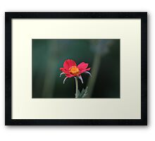 A crown amidst blood Framed Print