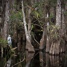 Egret in the Mangroves by Rob Lavoie