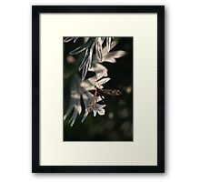 The crane fly in the evening sun Framed Print