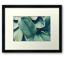 NATURE - GREEN - LEAVES - VEGETATION Framed Print