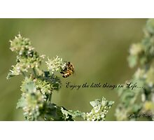 Bee-Enjoy the little things in life Photographic Print