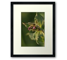A flower of fur Framed Print