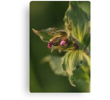 A flower of fur Canvas Print