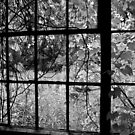 Through the window by Steve Small