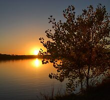 Fall Tree Sunset Reflection by heartlandphoto