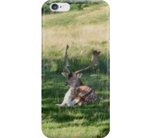 Chilling in the heat of the day iPhone Case/Skin