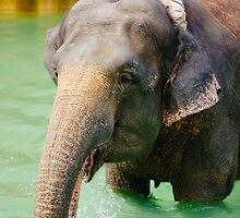 Elephant In Water by PatiDesigns