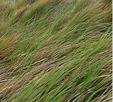 Windblown grass Photographic Print