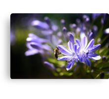 Scents of nectar Canvas Print