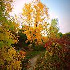 Autumn Trail by kkphoto1