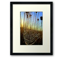 Dewdrop Morning Framed Print