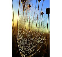 Dewdrop Morning Photographic Print