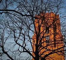 Wills Memorial Tree Silhouette  by Liam O'Reilly