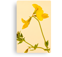Birds Foot - Trefoil - Wild Flower Macro Canvas Print
