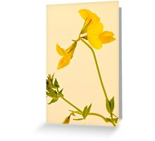 Birds Foot - Trefoil - Wild Flower Macro Greeting Card